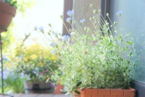 窓辺の野の花